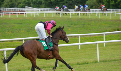 Last jockey and horse in the race running towards the finish line