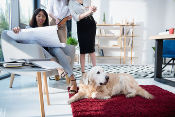 architects in formal wear working with blueprint while dog lying on carpet at office