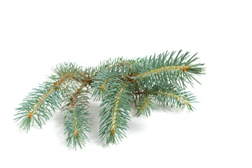 fir branch with green needles on white - isolated
