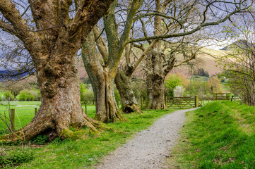 Footpath in the Lake District