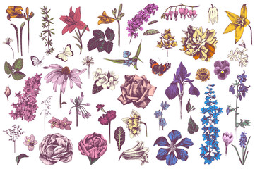 Highly detailed hand drawn garden flowers