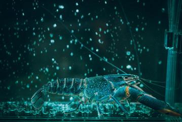 Close-up view of a crayfish