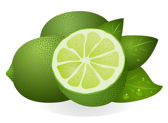 Lime with half and leaves isolated on white background vector eps 10
