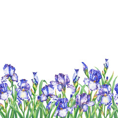 Floral seamless border with flowering violet irises, on white background. Panoramic horizontal view. Isolated watercolor hand drawn painting illustration. Design for fabric, wrap paper or wallpaper.