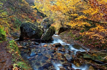 A mysterious stream flowing through the autumn forest of colorful foliage in an isolated gorge ~ Beautiful fall scenery of a river in a valley between Yamagata & Miyagi, Japan