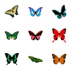Realistic Checkerspot, Bluewing, Demophoon And Other Vector Elements. Set Of Beauty Realistic Symbols Also Includes Morpho, Fly, Malachite Objects.