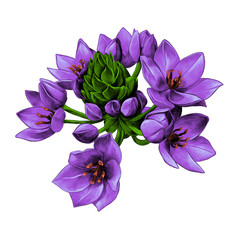 purple Agava flower buds sketch vector graphics color picture