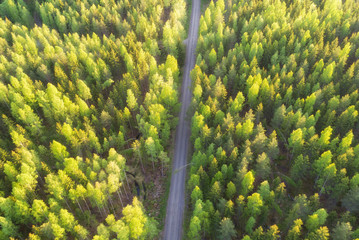 Aerial view of forest and road