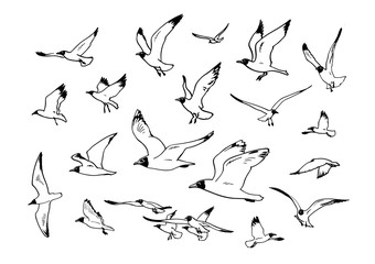 Set of flying seagulls.