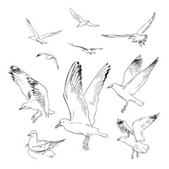 Sketch of flying seagulls.