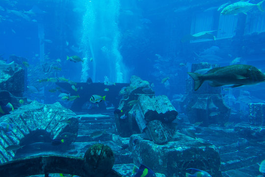 Lost chambers aquarium inside Atlantis hotel on Palm Jumeirah, Dubai, UAE United Arab Emirates