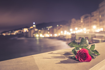 Red Rose with background the city of Camogli (Italy)