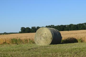 Hay Field