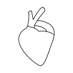 heart of human body health medicine cardiology anatomy vector illustration