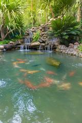 Fish pond in backyard