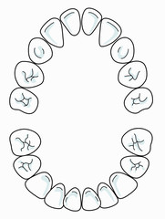 There are 20 milk teeth in total : 8 incisors, 4 canines and 8 molars All milk teeth should have come through by around the age of 3