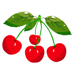Cherries with a green leaf isolated. Vector