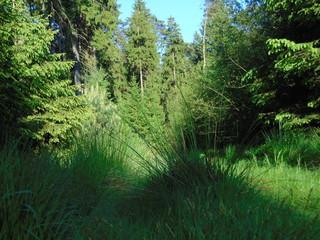 Waldweg mit Grasbüschel