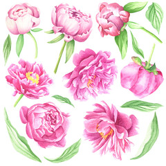 Watercolor peonies, hand drawn flowers set with leaves and stems, isolated on white background. Floral botanical illustration.