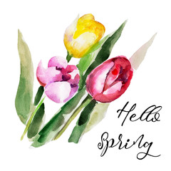 "Tulip flower isolated on white background with lettering ""Hello Spring"", vintage watercolor illustration in hand-drawn style."