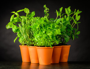 Culinary Herbs in Pottery Pots on Dark Background