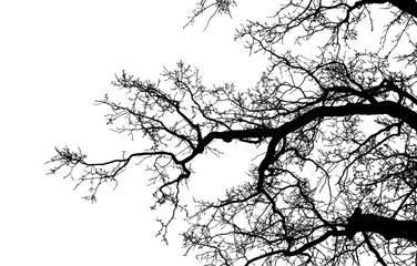 Realistic tree silhouette (Vector illustration).Ai10