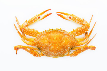 Top of the crab,Serrated mud crab.Steamed crab.Crab isolated on white background.