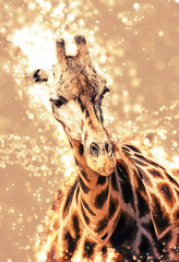 Foto op Canvas Carnaval Rothschild's giraffe with shimmering background, red photo filter