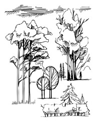 Graphic line Illustration , the entourage of trees on a white background