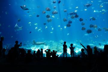 Children looking at Fish in huge Aquarium, Activity, Background, Fish Tank, Adventure