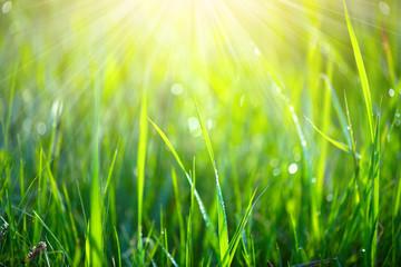 Fotoväggar - Green grass background. Fresh green spring grass with dew drops closeup