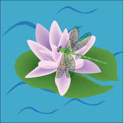 pink color lotus flower on leaves vector drawing
