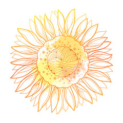 Vector composition with outline yellow Sunflower or Helianthus flower and pastel blots isolated on white background. Floral elements in contour style with ornate Sunflower for summer design.