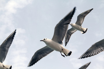 Seagulls flying near ocean shore