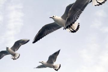 Seagulls flying near ocean shore