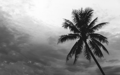 Silhouette coconut palm tree, back and white abstract background