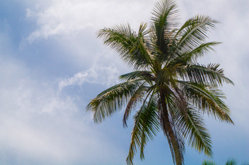 Beautiful palm tree in the tropical sun (with text space)