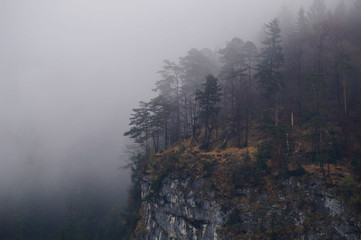 Mysterious alpine forest covered by mist