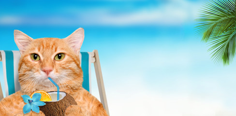 Cat sitting on deckchair and enjoying a cocktail  relaxing sitting on deckchair in the sea background.