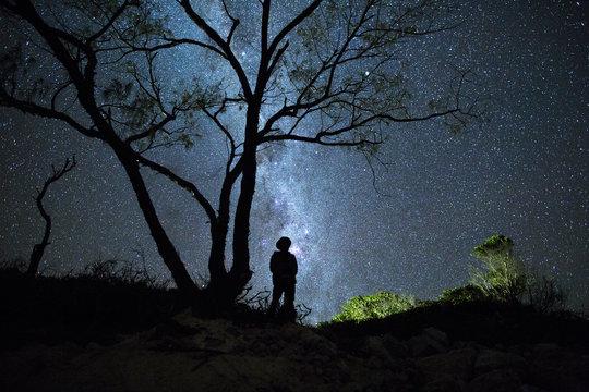 Man Stars and Tree