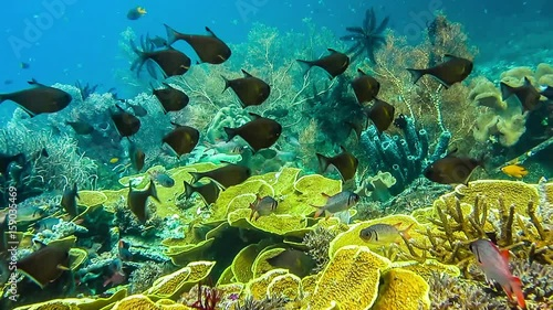 School of coral fish near hard corals on friwen wall for Free fishing spots near me