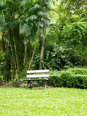 Wooden bench in green tropical garden