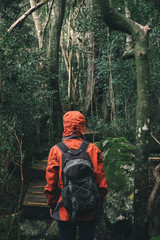 Hiker with a backpack and rain jacket standing in a forest