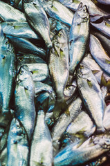 Dead fish on market