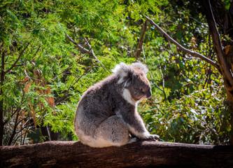 Beautiful animals in Australia