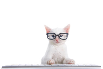 One fluffy white kitten with beautiful blue eyes laying on a computer keyboard isolated on white background. Wearing black geeky glasses looking directly at viewer.
