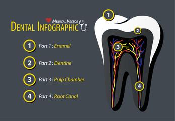 Dental Infographic . Flat design .