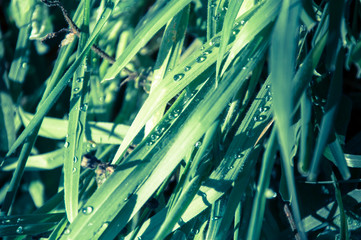 Dew Covered Grass