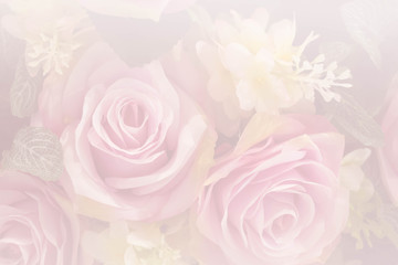 pink roses in soft color