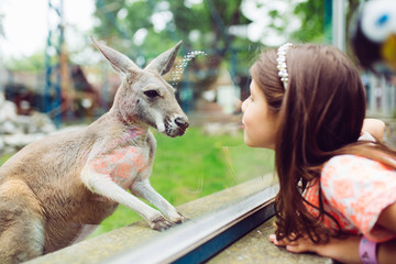 Papiers peints Kangaroo Cute little girl at zoo looking at kangaroo.